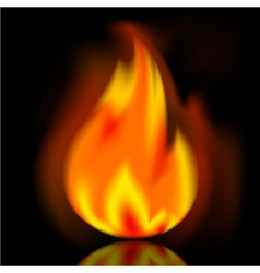 Fire bright flame on black background vector image