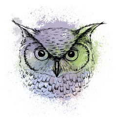 Sketch of owl head on a background of colored vector