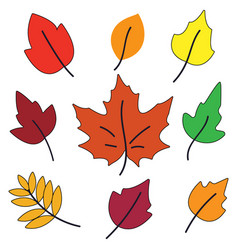 autumn leaves set isolated on white background vector image