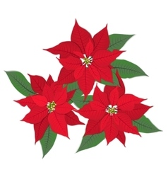 Three red poinsettia flowers on white vector