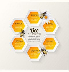 Bee infographics steps vector
