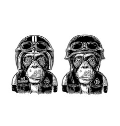 Monkey in the motorcycle helmet and glasses vector