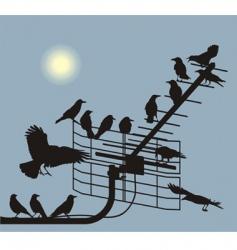 debate crows vector image