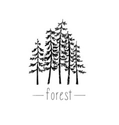 Hand drawn with wild forest vector image