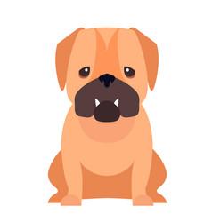 cute pug dog cartoon flat icon vector image