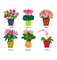 Houseplant flowers in pots vector