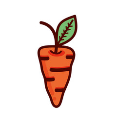 orange carrots organic healthy vegetable vector image