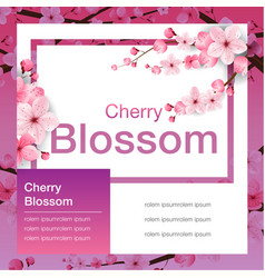 cherry blossom banner design sakura japan vector image