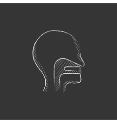 Human head with ear nose throat system drawn in vector