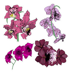 colorful drawing orchids collection vector image vector image