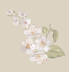 White cherry blossom flowers vector