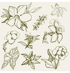 Flower Thai scetch vector image