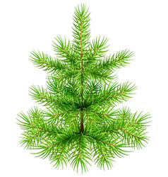 Green small christmas pine fir tree vector