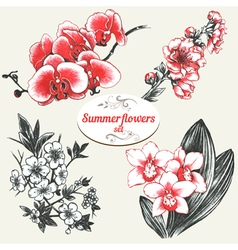 Summer flowers set vector