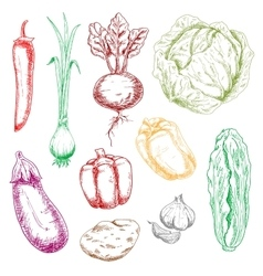 Color farm and garden vegetables sketches vector