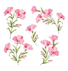 Flower branches set vector image