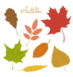 Set of veined autumn leaves isolated on white vector