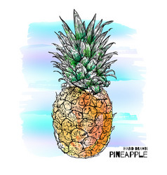 Hand drawn with ink colorful pineapple vector
