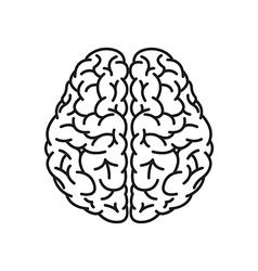 Human brain outline top view vector