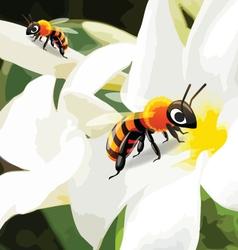 Bee on flower vector