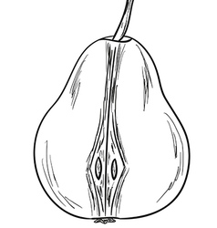 Pear sketch vector