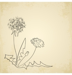 Dandelion pencil artwork on paper background vector