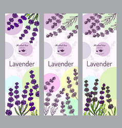 Herbal tea collection lavender vector