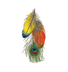 Hand drawn set of colorful bird feathers parrots vector