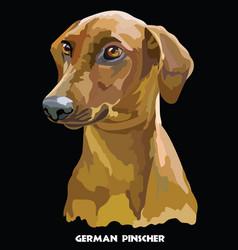 german pinscher colorful portrait vector image vector image