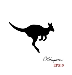 The black silhouette of a kangaroo on a white vector image