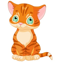 Cute tabby kitten vector