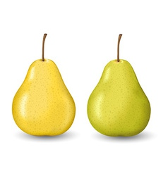 Two pears design vector