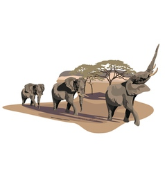African Elephant vector image vector image