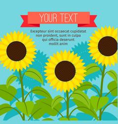 Sunflower beautiful card vector