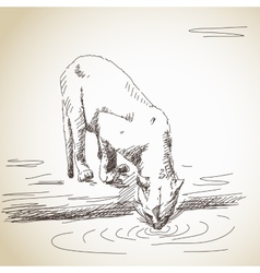 Lioness drinking vector image
