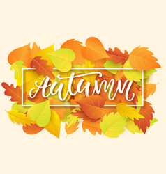 autumn banner template with bright fall leaves vector image