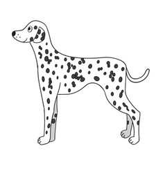 cute cartoon dalmatian isolated on white vector image vector image