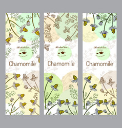Herbal tea collection chamomile vector