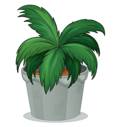A pot with a green leafy plant vector