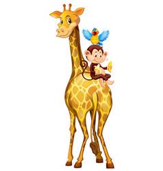 giraffe and monkey on white background vector image