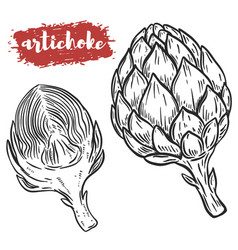 hand drawn artichoke isolated on white background vector image vector image