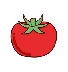 red tomato organic healthy vegetable vector image