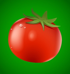 Fresh red tomato on green background vector