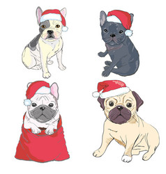 Christmas greeting card pug dog with red santa s vector