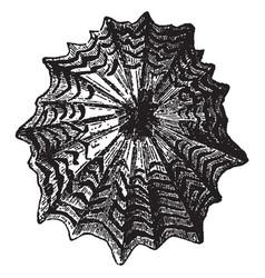 patella granatina vintage vector image