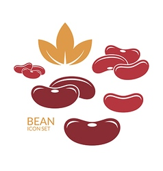 Red kidney bean vector