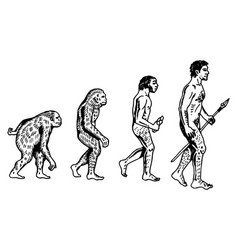 Human evolution engraving vector