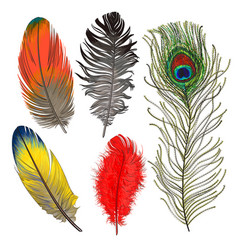 Hand drawn set of various colorful bird feathers vector