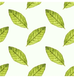 Seamless watercolor pattern with bayleaf on the vector