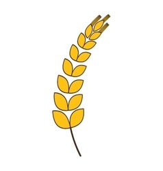 Wheat plant agriculture design graphic vector
